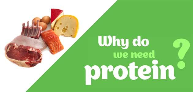 Công dụng của protein