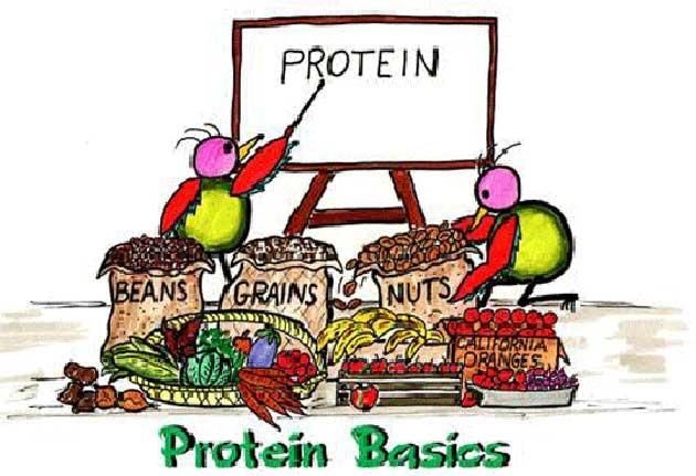Sữa non alpha lipid - giải quyết vấn đề protein