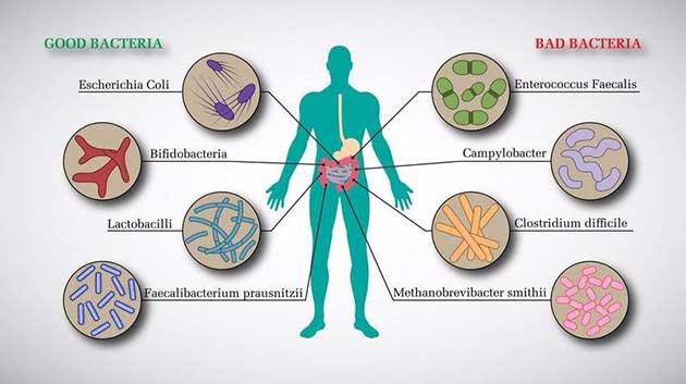 Công dụng của probiotic